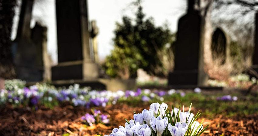 purple crocus in bloom during daytime